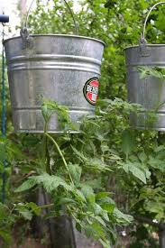 Upside Down Tomato Planter by 294 Best The Garden Images On Pinterest Plants Gardening And
