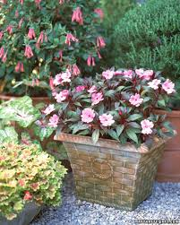 Best Flowers For Small Pots Decorative Flowerpots And Planters Martha Stewart