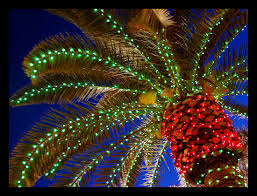 palm tree christmas tree lights christmas palm love when they do that to the development entrances