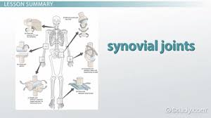 the six types of synovial joints examples u0026 definition video