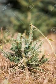 tree saplings postcards free ornaments of