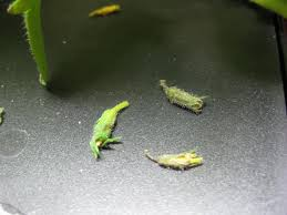 House Plants Diseases - what u0027s wrong with my houseplants house plant problems and solutions