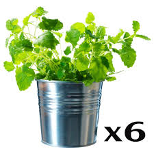 ikea plant pot 21 cute interior and rseapt org creative flower