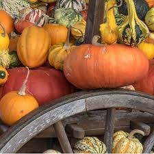 are you ready for halloween 10 ideas for garden centers to get