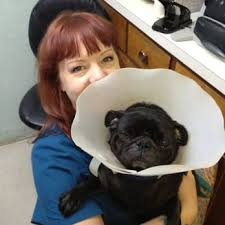 Creature Comforts Mobile Vet Creature Comfort Holistic Veterinary Center 24 Photos U0026 74