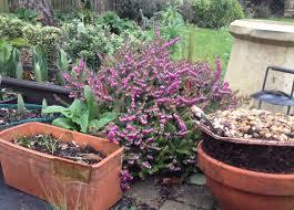 what u0027s in your winter garden