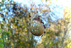 halloween nature background spider spider tag wallpapers spider color insect leaf colorfull animated