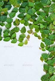 top 10 ornamental plants for vertical garden greenmylife