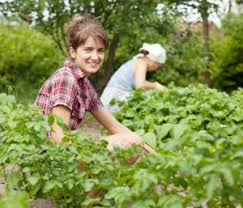 5 ways to prepare your vegetable garden for fall and winter