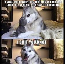 Pun Husky Meme - why am i laughing bad pun dog pinterest pun dog memes and