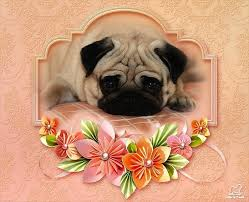 19 best pug birthday cards images on pinterest birthday cards