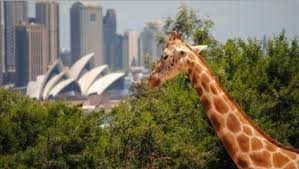 Taronga Zoo Christmas Party - taronga zoo for kids and families ellaslist