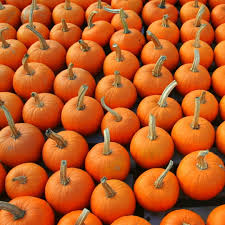 Pumpkin Picking Places In South Jersey by Boonton Pumpkin Patch Best Of Nj Nj Lifestyle Guides Features