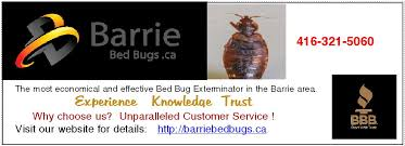 What Do Exterminators Use To Kill Bed Bugs How To Get Rid Of Bed Bugs Pest Control Canada