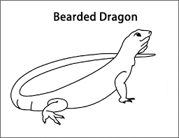bearded dragon coloring animals town animals color sheet