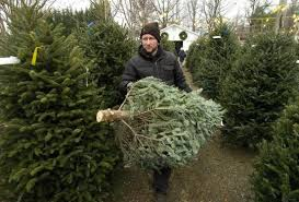 christmas tree prices with drought sales of real christmas trees lag in n c the