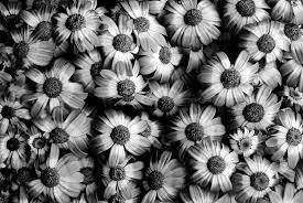 large print black flowers wallpaper 8 widescreen wallpaper