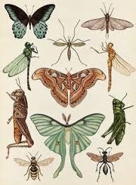 tip free printable digital book vintage animal insect