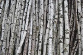 Birch Home Decor Birch Poles Home Decor Ebay
