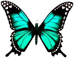butterfly transparent png clip image gallery yopriceville