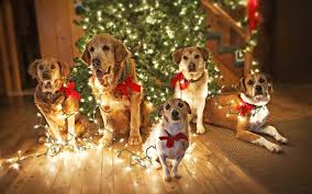 Christmas Lights Etc Christmas Adorable Dogs By The Christmas Tree Cards Boxed Amazon