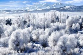 frosted trees in ogden valley utah photograph by utah images
