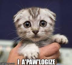 Sad Cat Memes - sad cat imgflip