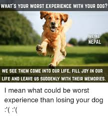 Meme Dogs - what s your worst experience with your dog meme nepal we see them