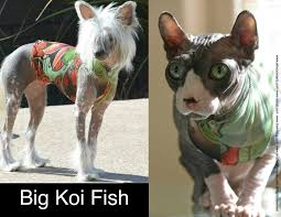 gifts for pets tattcat lucky u0027s bird tattoo sphynx cat
