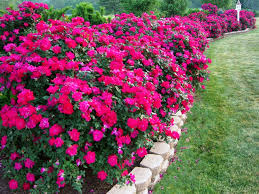 Landscape Flower Bed Ideas by Landscape Flower Beds Best Flower Beds Ideas U2013 Iimajackrussell