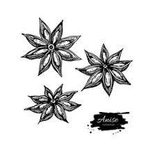 star u0026 anise vector images over 570