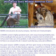 how much does wildlife removal and pest cost