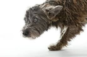 Temporary Blindness In Dogs Understanding Seizures And Brain Diseases In Dogs
