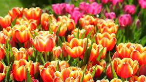 sending flowers internationally send flowers internationally without breaking the bank or dead