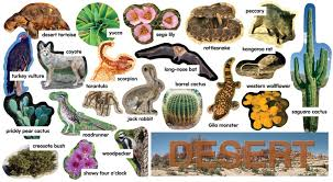 desert clipart plants and animal pencil and in color desert