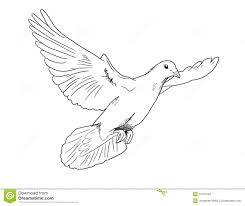 dove stock illustration image of innocence span isolated 15791234