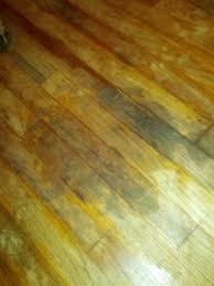 mold in hardwood flooring diy chatroom home improvement forum