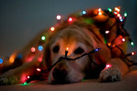 stunning decoration dog christmas lights how to take beautiful