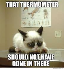 Grumpy Cat Photo 1 Best - 144 best all things grumpy cat images on pinterest ha ha funny