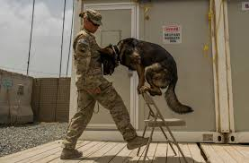 Animal Trainers Salary Dog Handler U0027s Homegrown Values Environment Mirror Her K 9 Career