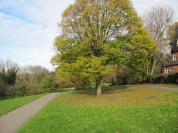 s green walks how to find fresh air and green open