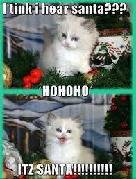 Christmas Cat Memes - christmas cat hahaha funny christmas pinterest cat animal