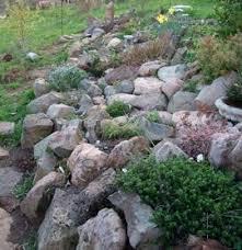 jestablog rock and roll gardens