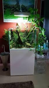 idee deco aquarium 167 best aquascaping images on pinterest aquarium ideas