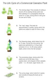 Light Cycle For Weed 25 Best Medical Marijuana Images On Pinterest Medical Marijuana