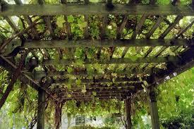 grape trellis houzz