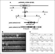 knock oncogenic kras transform mouse somatic cells