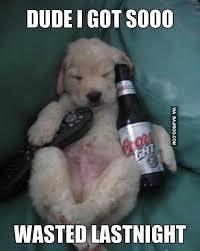 Wasted Meme - dude i got soo wasted last night funny dog meme