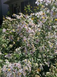 wild ones native plants top 10 native plants for part sun west cook wild ones