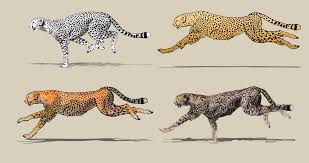 cartoon tiger running four different drawing style pencil